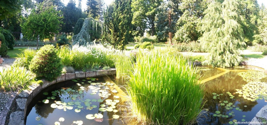 At one point you will arrive to this beautiful pond
