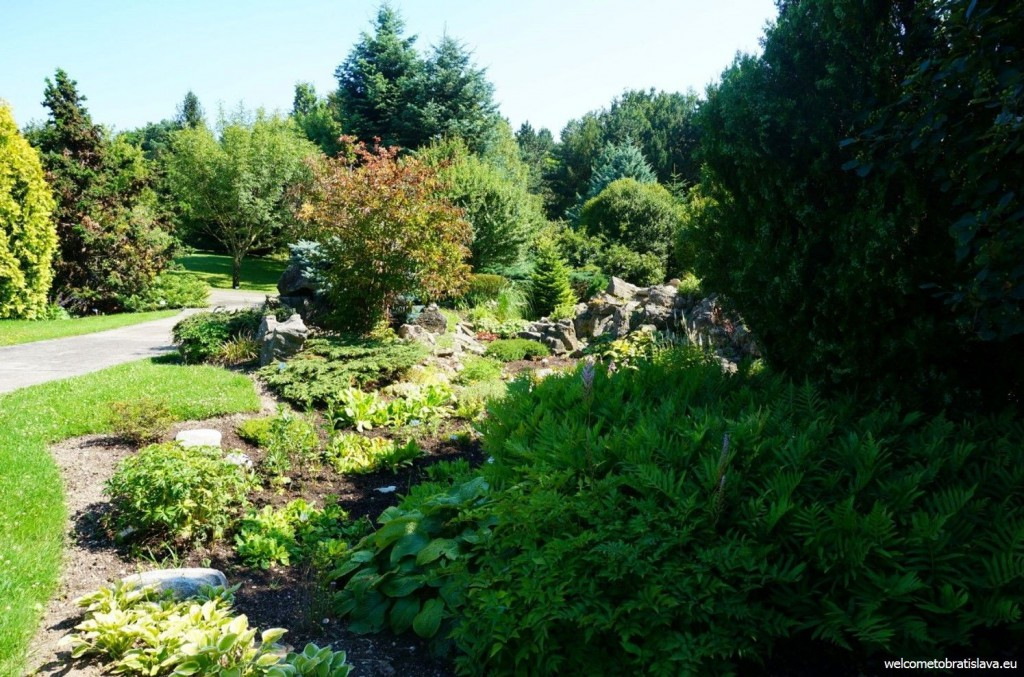 The Botanic Garden blossoms in summer