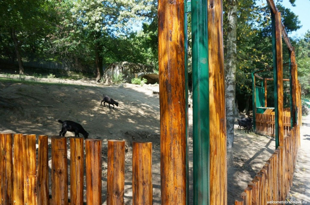 ZOO and its goats
