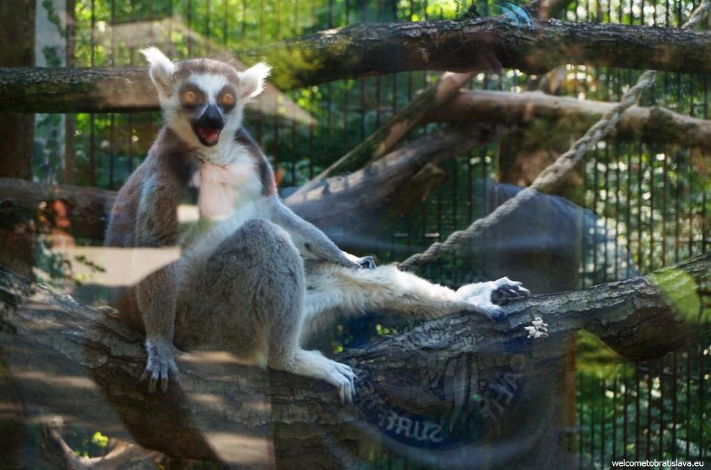 Amuzing monkey :)