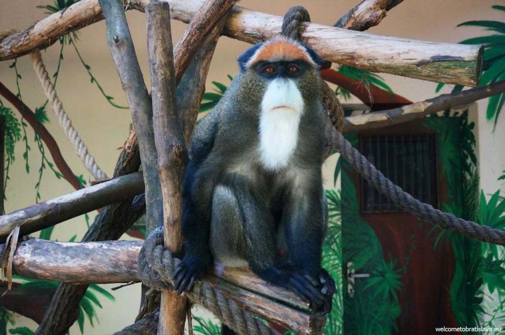Bored monkey