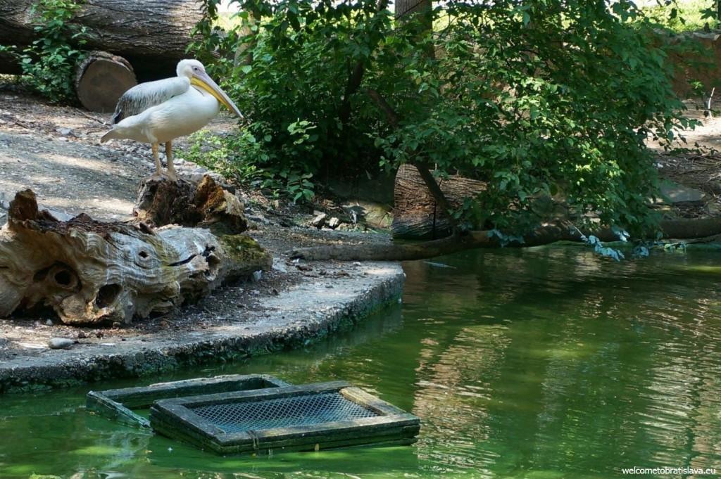 Mr. Pelican enjoying the nice weather