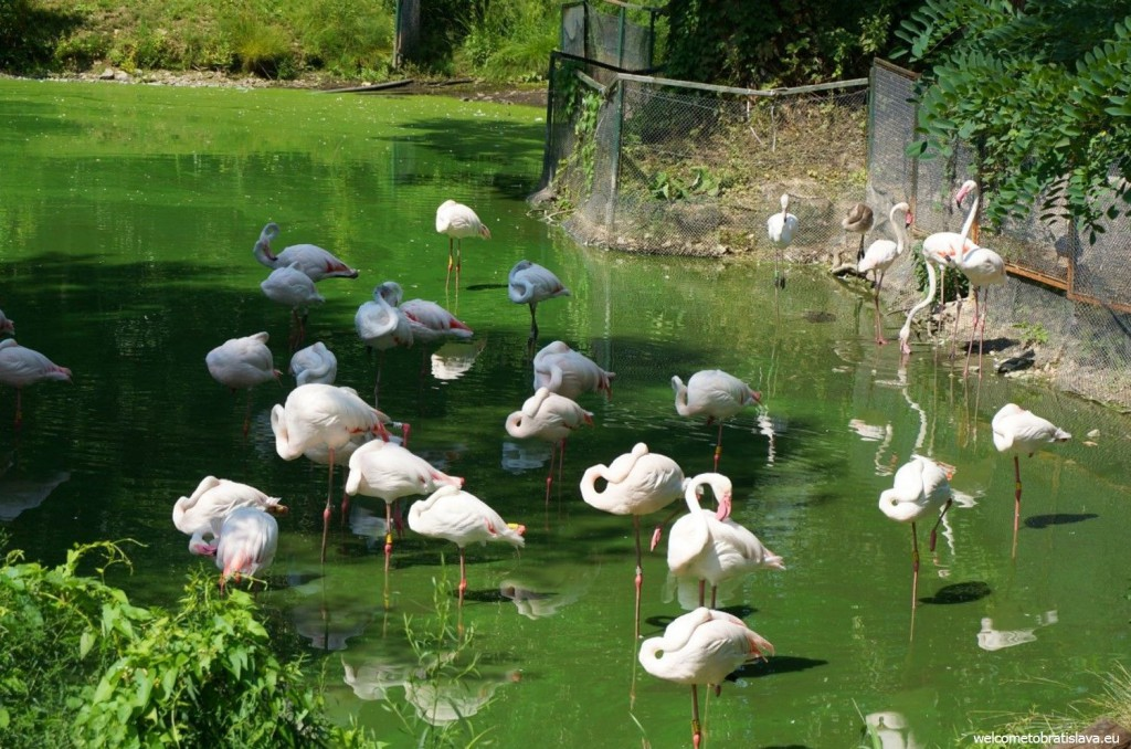 ZOO: flamingos