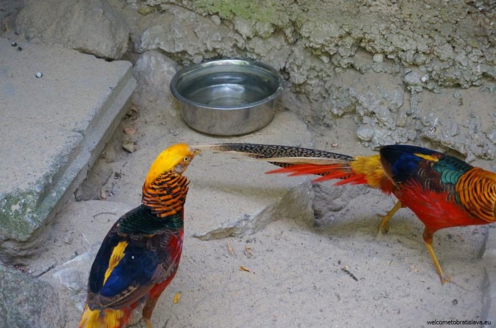 ZOO: parrots