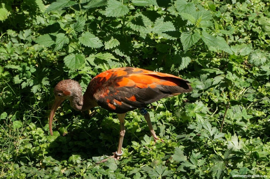 ZOO: a bird looking for some food