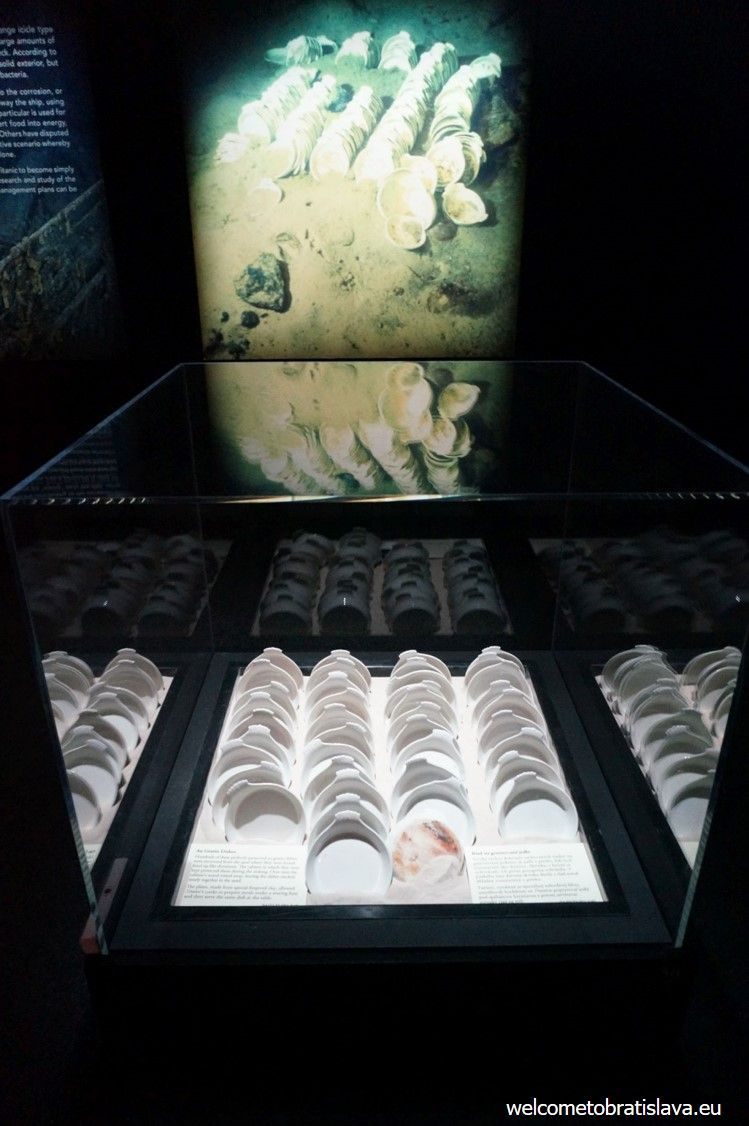 Pieces of porcelain found during the 2010 exhibition