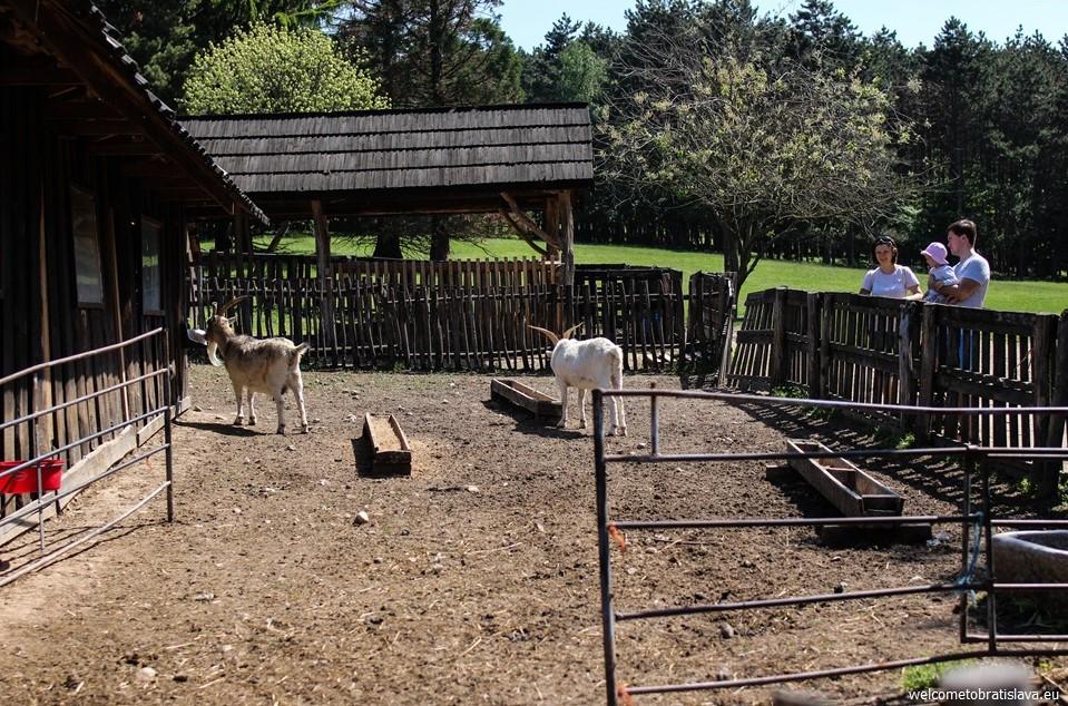 Bio Farm in Stupava